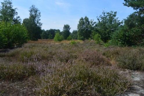 wandeling in Lommel 4-8-2019 092