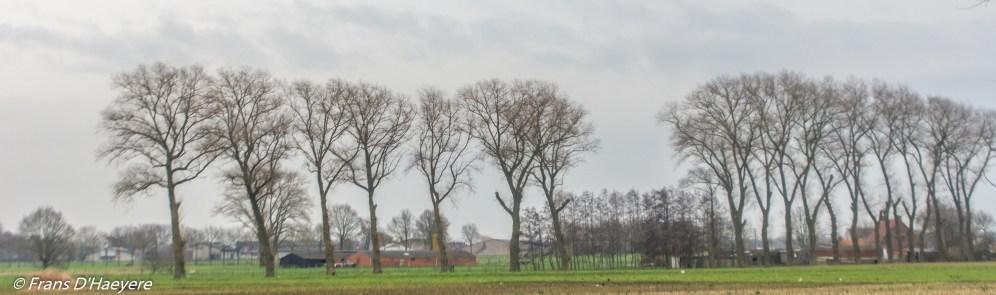 2020-02-08 Lichtervedde--72