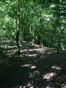 Bomen Scheveninse Bosjes