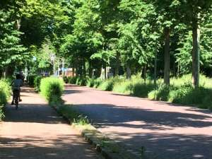 Scheveningseweg met bomen