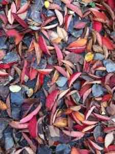 Rode blaadjes op de grond
