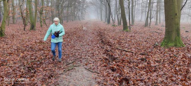 Beagle wandeling in Drenthe