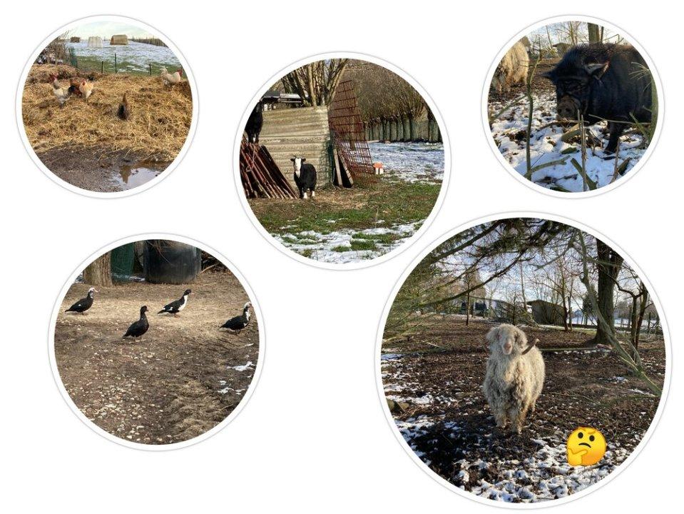 Dieren die wij tegengekomen zijn tijdens ons wandeling in Vollezele