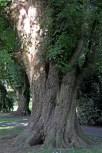 Stam van een boom