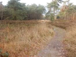 Heide Reestdal (2)