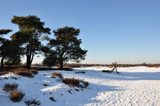Drenthe: Balloërveld winter