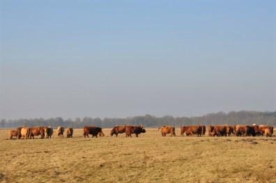 Drenthe: Eext 10 KM