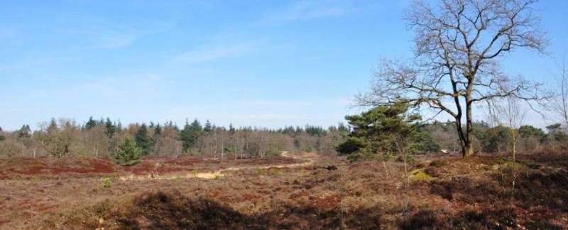 Één West-Bakkeveen 11.4 km