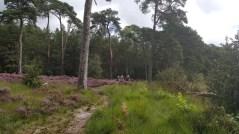 Wandeling boswachterij de Eese