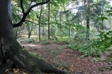 Noordlaarderbos-Vijfitg Bunder