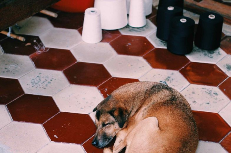 A dog curled up on the tiled floor at Cambodian Weaving Village.