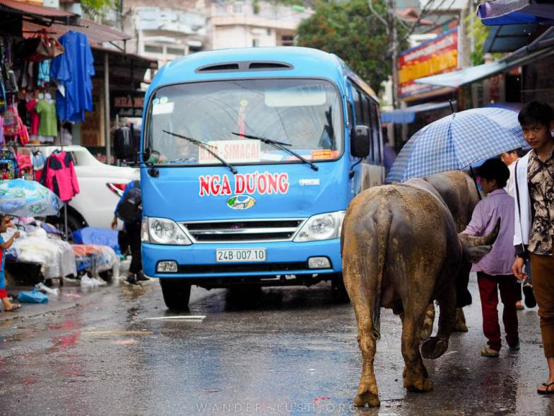 A blue bus makes its way down a busy street in Lao Cai, Vietnam.