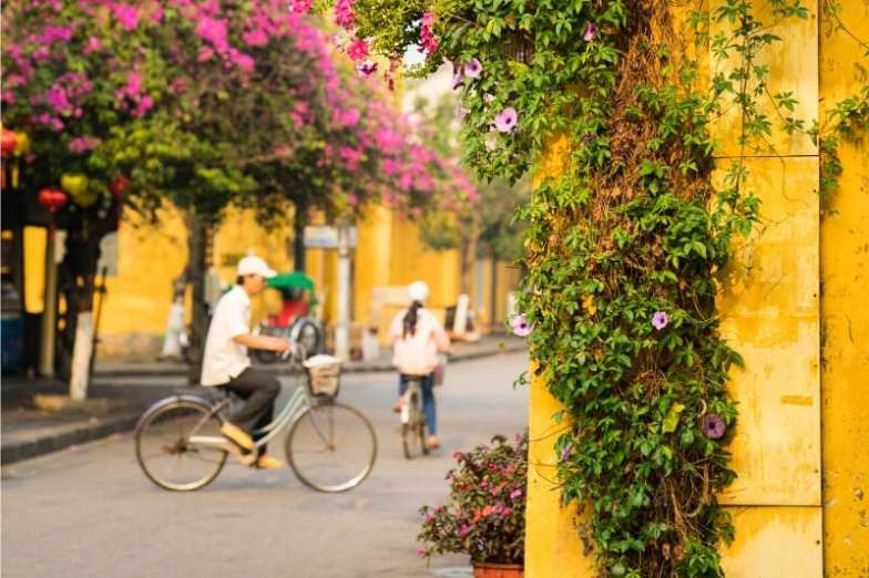 Yellow walls with creeping vines in Hoi An Ancient Town.