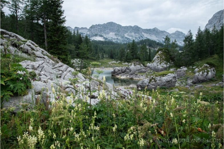 Mountains and wildflowers.