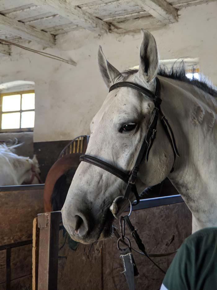 Wb romania horse farm 68