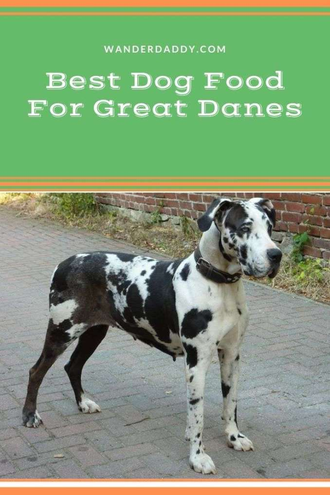 Best Dog Food For Great Danes