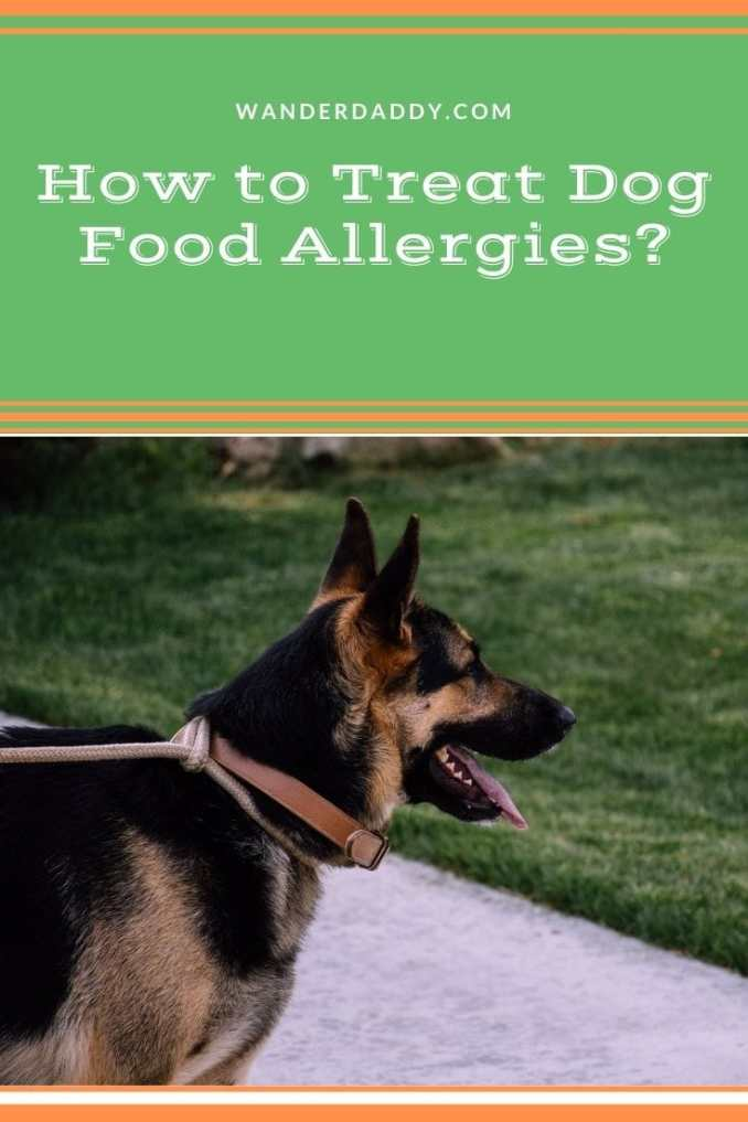 How to Treat Dog Food Allergies