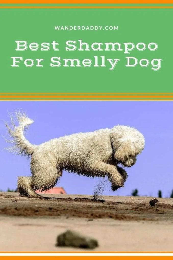 Best Shampoo For Smelly Dog