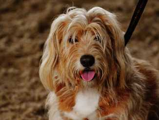 dog breeds with webbed feet