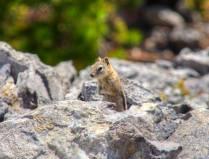 Kleine Eichhörnchen sind überall unterwegs