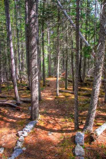 """Der untere Teil vom """"East End of Rundle"""" Track geht durch dichten Wald"""
