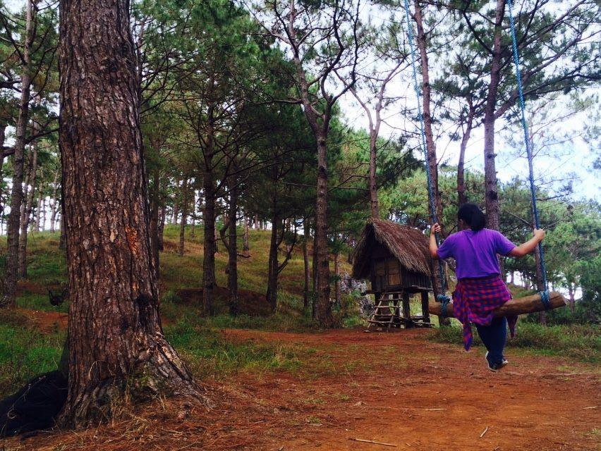 Swing Under the Big Pine Tree