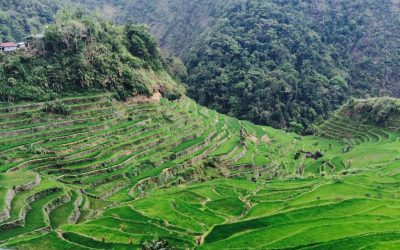 Batad Rice Terraces Travel Guide: A UNESCO World Heritage