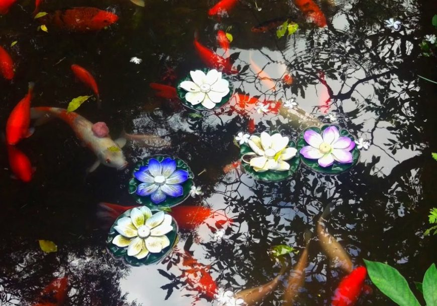 Koi Fish pond, Hawaii
