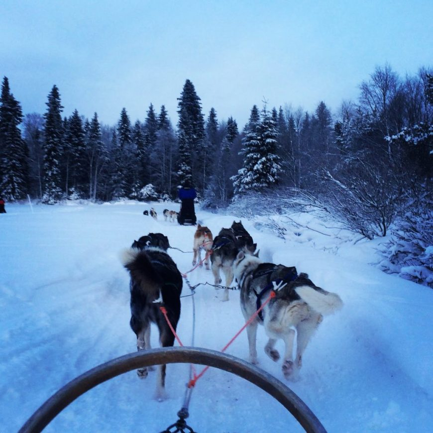 Husky sledding in Finland