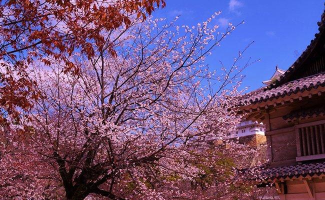 9 Japanese Experiences Around the World
