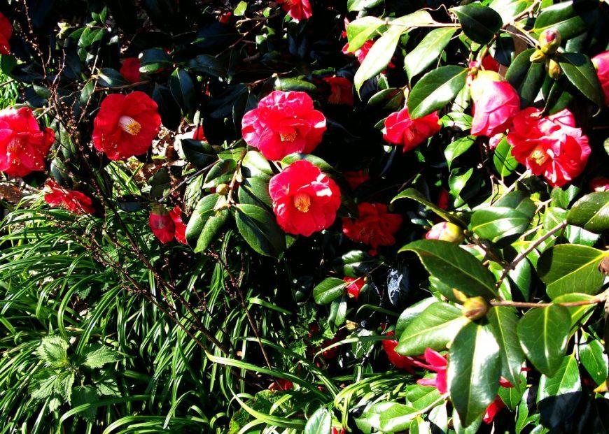 Flowers in Devon