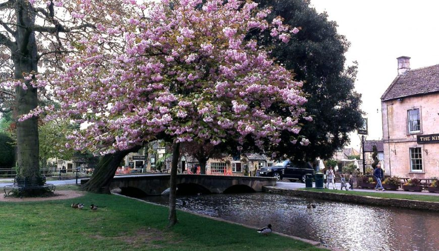 Cherry blossoms at Bourton-on-the-Water