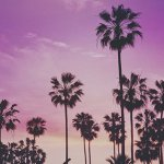 A Pretty Woman's Guide To Los Angeles