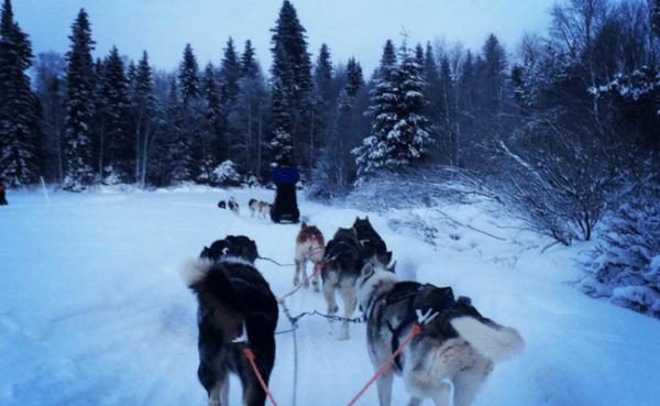 Bucket List Priority #1: Husky Sledding in Finland
