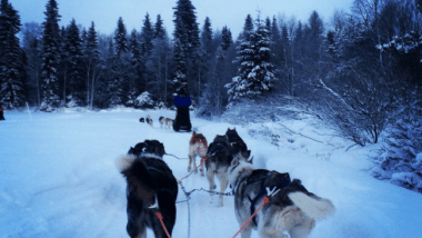 Bucket List Priority #1: Husky Sledding in Finland
