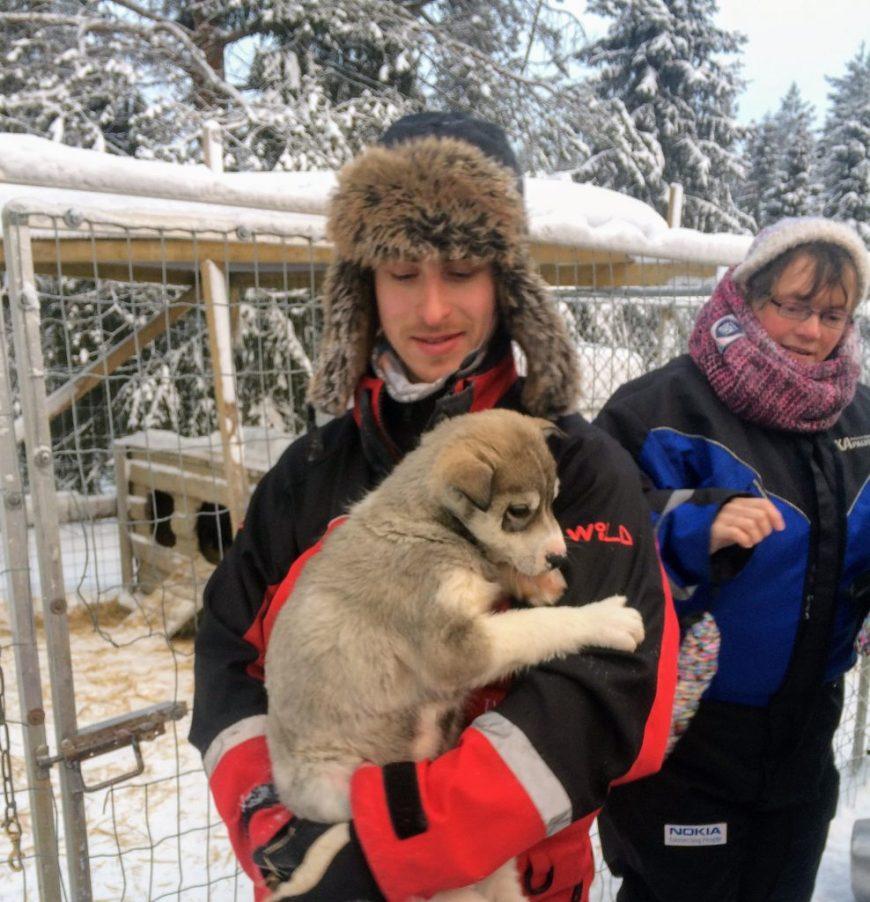 Husky Puppy in Finland