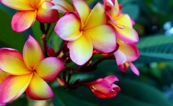 Experiencing 'Aloha Spirit' in Hawaii