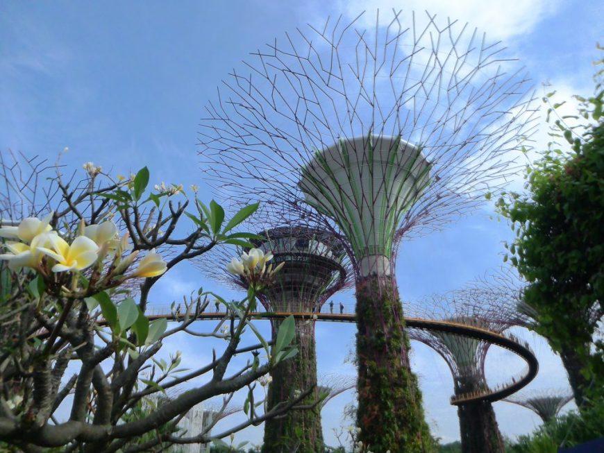 Singapore Bay Gardens