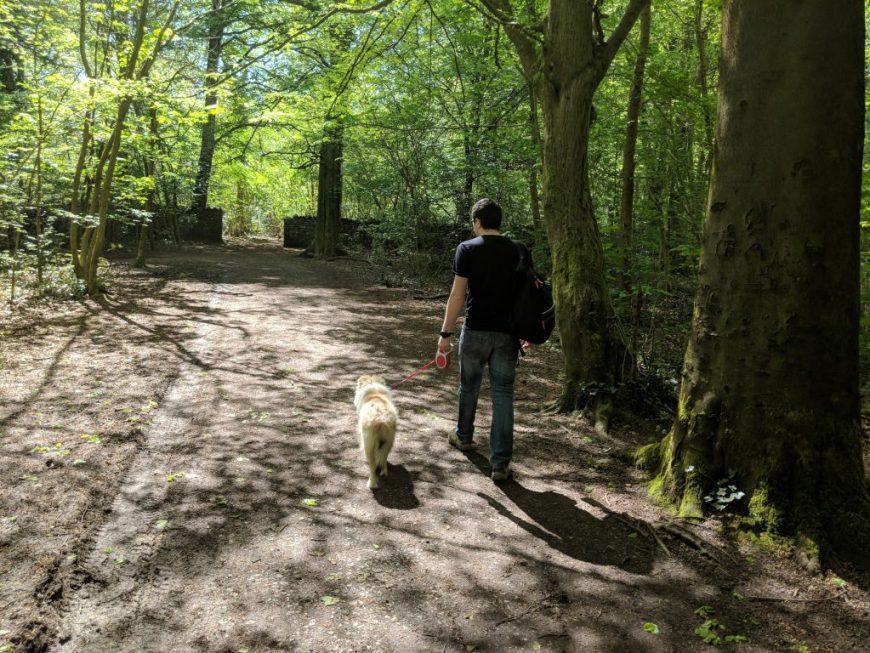 Leigh Woods Dog Walk
