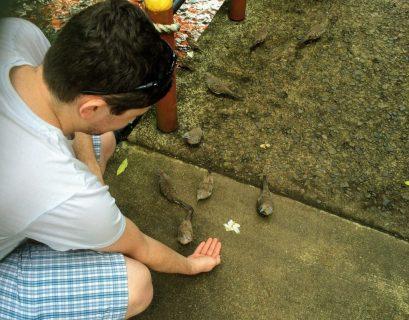 Scott feeding birds in Hawaii