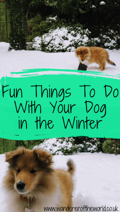 10 Fun Things To Do With Your Dog in the Winter