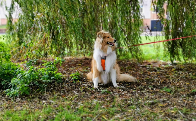 18 Life Lessons We've Learned From Our Dog