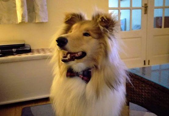 Kai posing in his bow tie