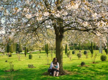 Justine sitting under cherry blossom