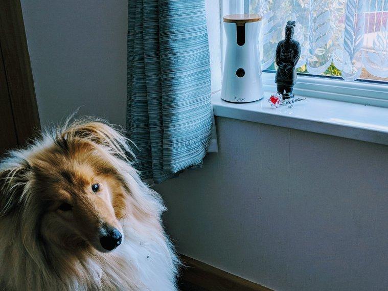 Kai waiting for a Furbo treat
