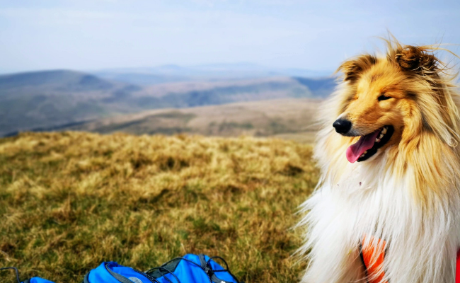 Dog Travel Guides