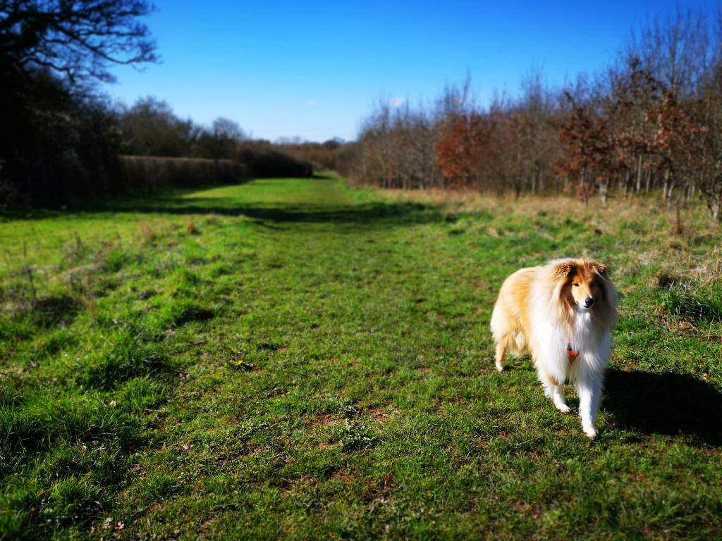 Overscourt Wood Dog Walk
