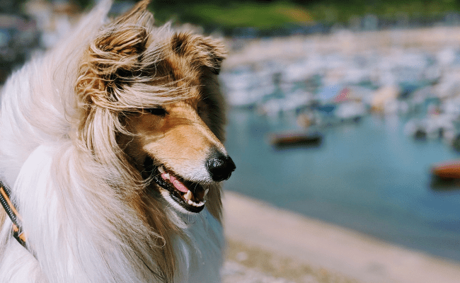 The Perfect Dog Friendly Weekend Getaway in Devon