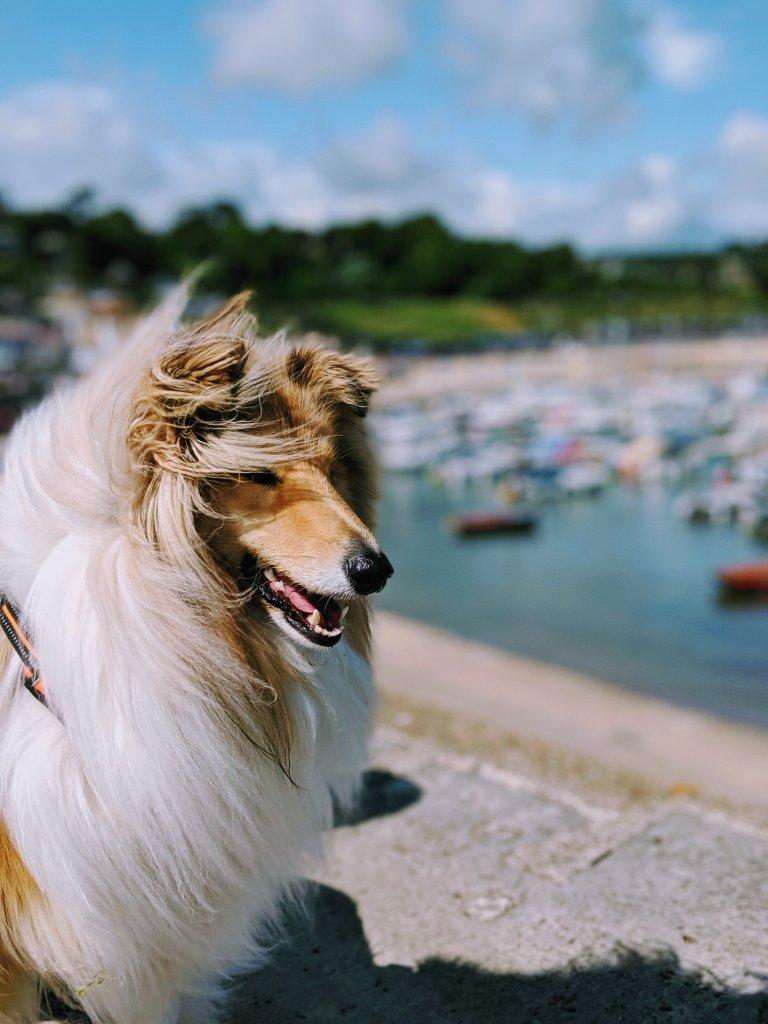 Kai is all smiles in Devon, England!