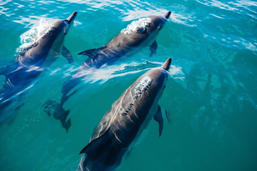 3-Hour Dolphin Watching & Snorkel Excursion, Hawaii